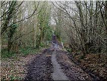 TQ8187 : Poors Lane Bridleway by terry joyce