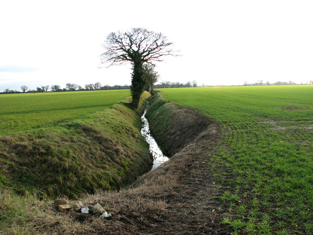 Trees growing beside a ditch in field south of Winfarthing Road