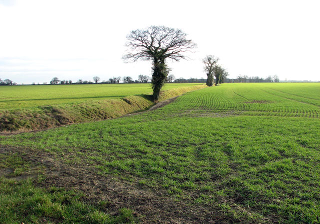 Ditch traversing fields south of Winfarthing Road