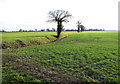 TM0886 : Ditch traversing fields south of Winfarthing Road by Evelyn Simak