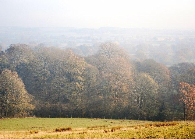 Sandon Big Wood