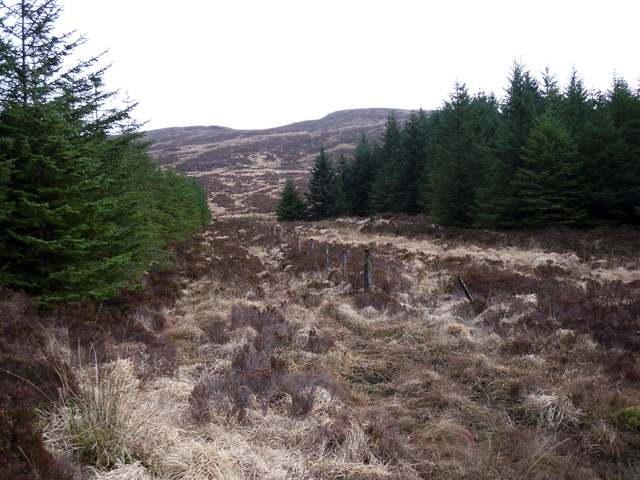 Forestry South of Cnoc an Tobair