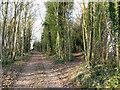 TL5553 : Fleam Dyke path at Newheath Plantation by John Sutton