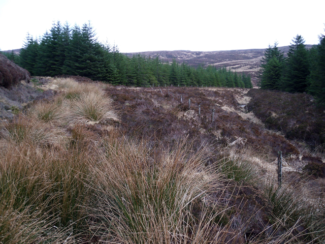 Forestry South of Cnoc an Tobair (2)