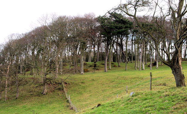 Pythic Wood near Helen's Bay