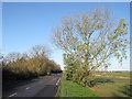TF3804 : Gull Bank by Hugh Venables