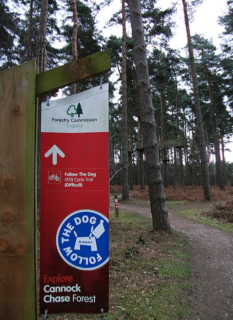 Cycle trail, Cannock Chase Forest