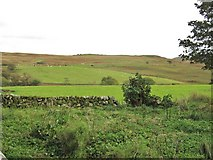 NX6060 : In-bye fields at Laghead by Ann Cook