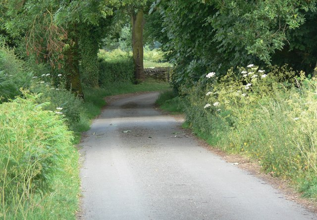 Lane to Strawberry Hill Plantation
