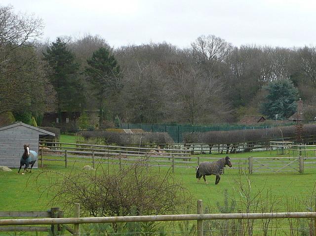 Paddocks near Ley Hill