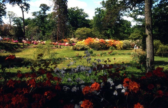 Colourful azaleas in Exbury Gardens by Steve Daniels