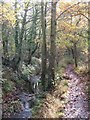 TQ4167 : The River Ravensbourne in Scrogginhall Wood (6) by Mike Quinn