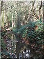 TQ4167 : The River Ravensbourne in Scrogginhall Wood (11) by Mike Quinn