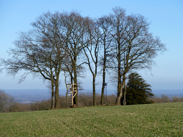 Deer seats, Woolavington Down
