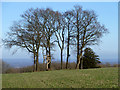 SU9415 : Deer seats, Woolavington Down by Robin Webster