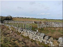 NZ0997 : Stone enclosures near Low Hesleyhurst by Oliver Dixon