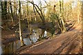SJ6576 : Path alongside Cogshall Brook by Galatas