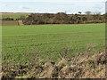 TL5449 : Burgoyne's Plantation by John Sutton