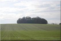 TQ8554 : Winter wheat by Pilgrims' Way by N Chadwick