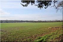 TQ8554 : Large wheat field by Pilgrims' Way by N Chadwick