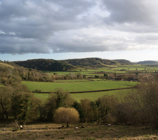 Looking towards Great Breach Wood from Collard Hill.
