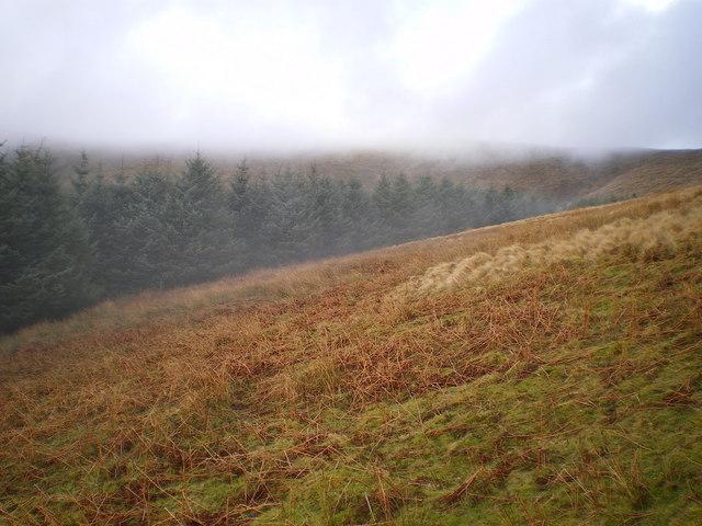 Forest edge above Cwm Ffernol