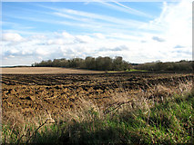 TG0336 : Farmland south of the village of Sharrington by Evelyn Simak