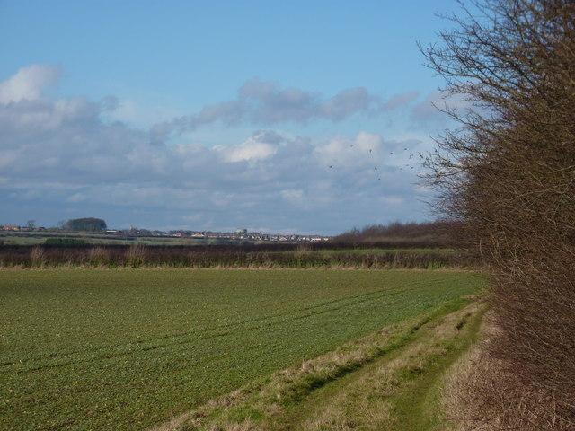Fields by Roseland Wood