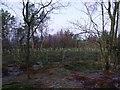 NS7774 : Cumbernauld, Glencryan Woods by Robert Murray