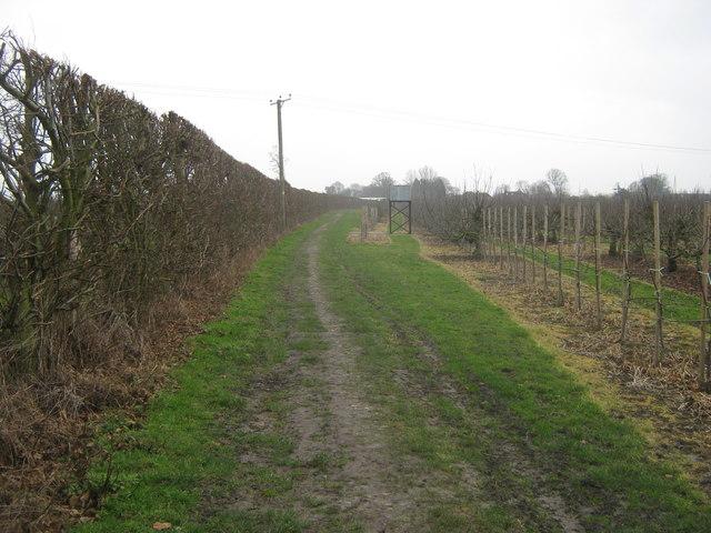 Bridleway to Felderland