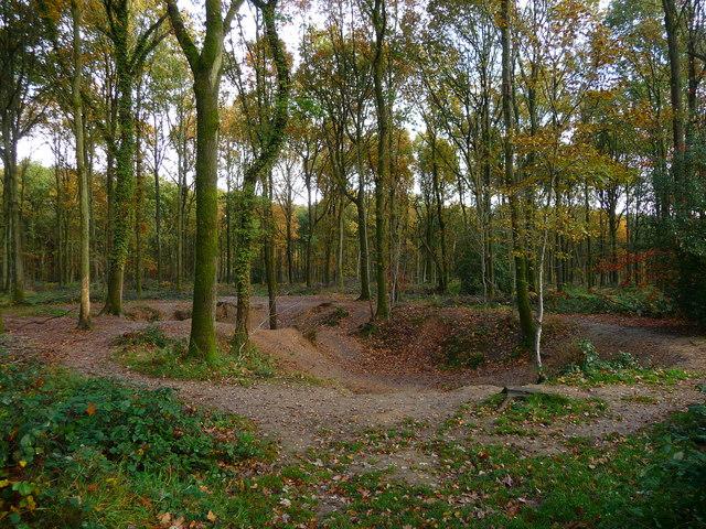 Savernake Forest - Depression