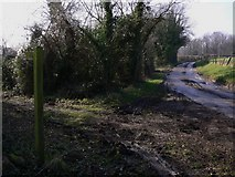 SU8315 : Footpath leaves road north of Chilgrove by Shazz