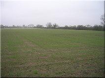 SE6925 : Farmland north of Quarter Gate Lane by JThomas