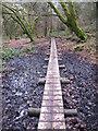 SW6032 : Boardwalk in Godolphin Woods by Rod Allday