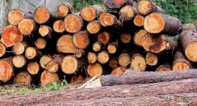 Managed woodland, Minnowburn, Belfast (3)