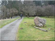 SH7519 : Gate into forest by liz dawson