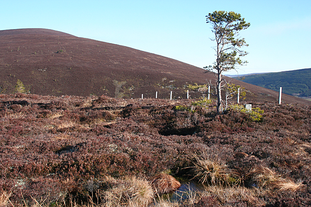 Bog Pools and Lonely Pine