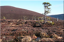 NJ2835 : Bog Pools and Lonely Pine by Anne Burgess