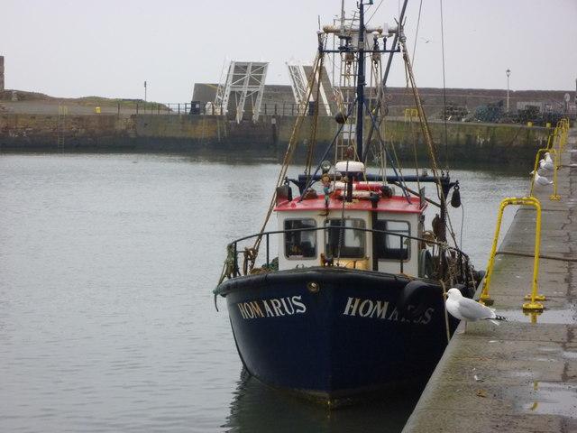 Coastal East Lothian : Homarus at Victoria Harbour, Dunbar