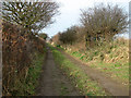 TG5001 : Hedge-lined track north of Hobland by Evelyn Simak