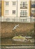 TQ3681 : Fish, Regent's Canal by Derek Harper