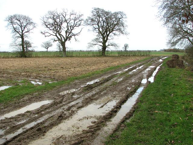Muddy track west of Hales Hall