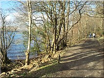NS3883 : The Shore Walk, Balloch Country Park by Stephen Sweeney