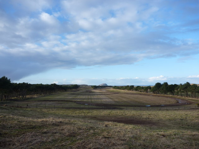 East Lothian Landscape : The Racetrack Between The Shelterbelts at Lochhouses Links by Richard West