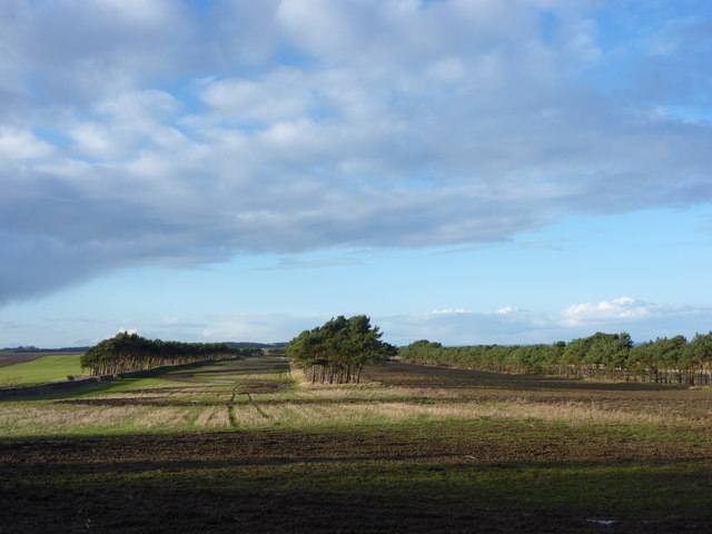 East Lothian Landscape : Shelterbelts at Lochhouses Links by Richard West