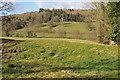 SO3629 : Dulas valley by Philip Halling