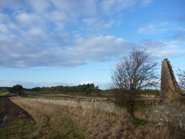 East Lothian Landscape : The Shelterbelts at Lochhouses Links - Seen From The Ruin On The Northern Edge Of Brownrig Wood by Richard West