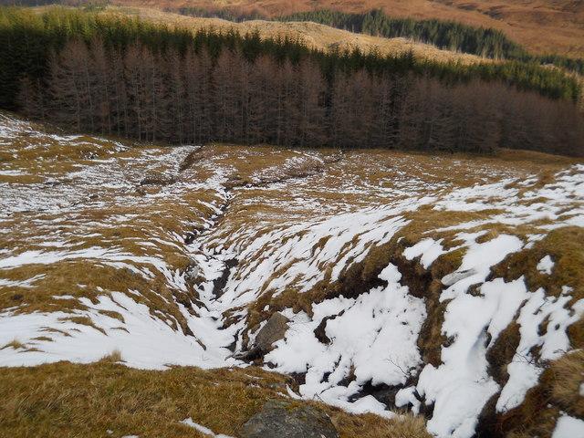 Forest edge, Lairig Leacach