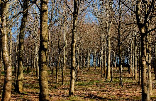 Woodland near Helen's Bay (1)