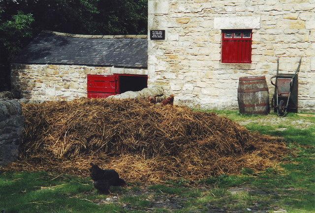 Chickens and straw, Cherryburn, Northumberland